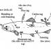 Các phương pháp đánh dấu trong chọn lọc giống thủy sản