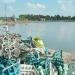 Cà Mau: Nhiều ao nuôi tôm bị bỏ hoang