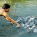 Nuôi thủy sản nước ngọt đối phó với xâm nhập mặn