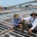 Bà Rịa - Vũng Tàu: Triển vọng nuôi hàu Thái Bình Dương