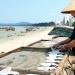 Huyện đảo Cô Tô đón chuẩn Nông thôn mới