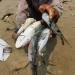 Hỗ trợ ngư dân bị thiệt hại trong vụ cá chết