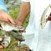 Kết luận ban đầu về tình trạng cá chết bất thường tại miền Trung