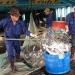 Đồng Tháp: Giá cá tra nhích lên nhưng vẫn còn nhiều áp lực