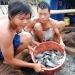 Cá rô phi thích ứng hạn, mặn