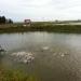 Hạn chế kháng sinh trong nuôi trồng thủy sản