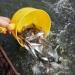 Giải pháp tăng tỷ lệ sống cho cá giống