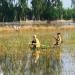 Thêm một nạn nhân tử vong trong vụ bắt cá tại Campuchia