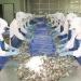 Việt Nam và Hoa Kỳ ký thỏa thuận về chống bán phá giá tôm nhập khẩu