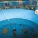 Hoàn thiện khung pháp lý giống thủy sản