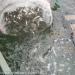 Thái Nguyên: Thả cá giống tái tạo nguồn lợi thủy sản