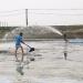 Giải pháp quản lý chất thải ao nuôi thủy sản