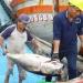 """Bình Định: Hàng ngàn ngư dân """"vui xuân"""" trên biển"""