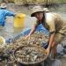 Chính sách hỗ trợ mới cho lĩnh vực thủy sản
