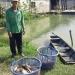 Đại gia chuỗi cá tra biến mất: Không đẩy khó cho nông dân