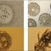 Nghiên cứu đặc điểm sinh học sinh sản và đánh giá ảnh hưởng của độ mặn tới hoạt động sinh sản của rươi (Tylorrhynchus heterochaetus, Quatrefages, 1865) trong vụ chiêm tại Hải Phòng Việt Nam