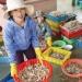 Quảng Nam: Được mùa tôm ghẹ