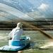 Hệ thống nuôi tôm tuần hoàn tại Panama