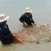 Con tôm Việt Nam: Hướng tới thương hiệu toàn cầu