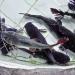 Xác định tác nhân gây bệnh xuất huyết trên cá lăng