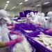 Chứng thư thủy sản: Giấy thông hành sang thị trường Trung Quốc