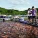 Hà Tĩnh: Tiềm năng nuôi cá lồng ở đập Khe Còi