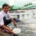 Tôm giống C.P. Việt Nam: Từ thương hiệu tới đẳng cấp