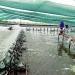 Cà Mau: Đột phá nuôi tôm siêu thâm canh