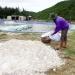 Phòng trừ dịch bệnh thủy sản sau lũ