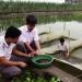 Quan tâm hơn đến giống thủy sản truyền thống