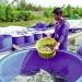 HTX Tân Hưng: Thành công từ đổi mới phương thức sản xuất