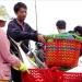 Mục tiêu 2 triệu tấn khai thác vụ cá Nam