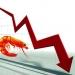 Xuất khẩu tôm: Giải pháp nào khi giá tôm giảm