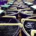 Nuôi trồng thủy sản tuần hoàn