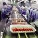 Thị trường tôm châu Á: Thoát cơn khủng hoảng giá