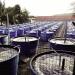 Nhu cầu trao đổi nước và Methionine trong khẩu phần ăn của TTCT Thái Bình Dương