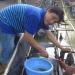 Bà Rịa - Vũng Tàu: Sản xuất lươn giống bán nhân tạo cho thu nhập ổn định
