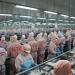 Minh Phú: 10 tháng xuất khẩu đạt 612 triệu USD