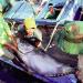 Lệ phí cấp phép khai thác thủy sản