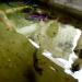Quảng Ngãi: Nuôi cá cảnh biển ở đảo Lý Sơn