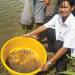 Tạo đòn bẩy xuất khẩu tôm vào Mỹ
