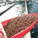 Ảnh hưởng của tần suất và thời điểm cho ăn đến tăng trưởng và hiệu quả sử dụng thức ăn ở cá da trơn (catfish)
