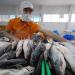 Cập nhật giá cá tra tại An Giang tuần 10 - 17/5/2019