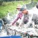 Thu nhập ổn định nhờ nuôi xen ghép cá