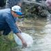 Phóng sinh 10.000 con cá giống tại chùa Bồ Đề