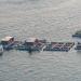 Tăng cường giám sát hoạt động nuôi thủy sản