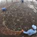 Giải pháp phát triển bền vững nghề nuôi tôm