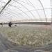Giải pháp giảm chi phí nuôi tôm
