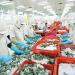 Xuất khẩu tôm tăng trưởng ổn định tại Đài Loan