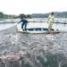 Mở hướng nuôi cá tầm trên hồ Cốc Ly